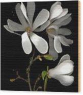 April Magnolia Wood Print