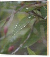 April Showers 1 Wood Print