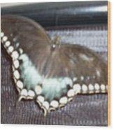 Aqua Wings Wood Print