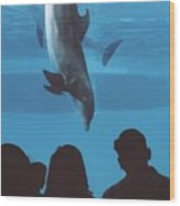 Aquarium Dolphin Wood Print