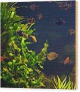 Aquarium Fish And Plants In Zoo Wood Print