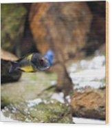 Aquarium Fish At Stones Arrangement Wood Print
