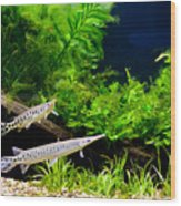 Aquarium Fish Couple In Zoo Wood Print