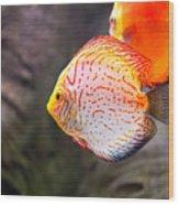 Aquarium Orange Spotted Fish Wood Print