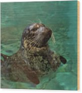 Aquarium Seal  Wood Print