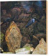 Aquarium Stones Arrangement Wood Print