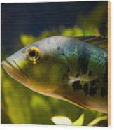 Aquarium Striped Fish Portrait Wood Print