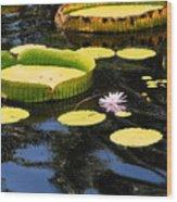 Aquatic Life Wood Print