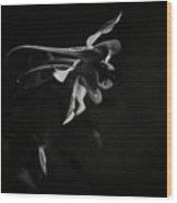 Aquilegia Black And White Wood Print