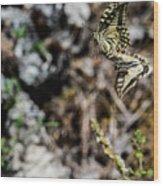 Aquino's Butterflies Wood Print