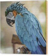 Ara Parrot Wood Print
