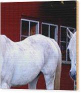 Arab Horses At Home, Behind Their Fence   Wood Print