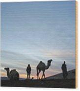 Arabian Camel At Sunset Wood Print