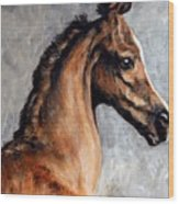 Arabian Foal Wood Print