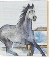Arabian Horse And Snow - Da Wood Print