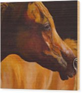 Arabian Horse Oil Painting Wood Print