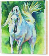 Arabian Stallion Wood Print