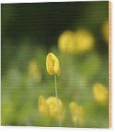 Arachis Pintoi - Peanut Flower Wood Print
