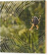 Araneus Morning Wood Print