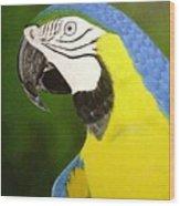 Arara Azul Wood Print
