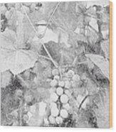 Arbor Grapes Sketch Wood Print