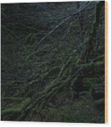 Arboreal Forest Wood Print