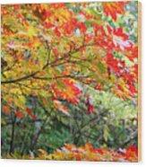 Arboretum Autumn Leaves Wood Print