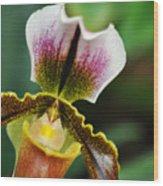 Arboretum Tropical House Orchid II Wood Print