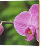 Arboretum Tropical House Orchid Wood Print