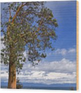 Arbutus Tree At Rathtrevor Beach British Columbia Wood Print