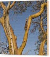 Arbutus Tree At Roesland Wood Print
