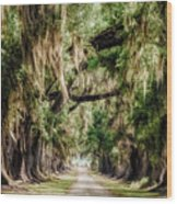 Arch Of Oaks - Evergreen Plantation Wood Print