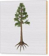 Archaeopteris Sp Tree Wood Print