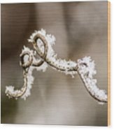 Arched Frosty Curlique Wood Print
