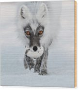 Arctic Fox And Snow Goose Egg Wood Print