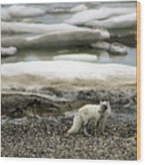 Arctic Fox By Frozen Ocean Wood Print