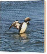 Arctic Loon Wood Print
