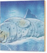 Arctic Seal Wood Print