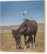Arctic Tern Attacking Mare Wood Print
