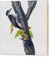 Arctic Three-toed Woodpecker Audubon Birds Of America 1st Edition 1840 Octavo Plate 268 Wood Print