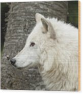 Arctic Wolf - On Watch Wood Print
