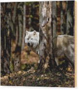 Arctic Wolf In Forest Wood Print