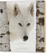 Arctic Wolf Seen Between Two Trees In Winter Wood Print