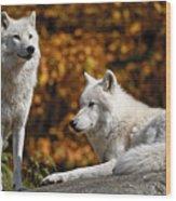 Arctic Wolves On Rocks Wood Print by Michael Cummings