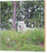 Arctive Wolf Lying Down Wood Print