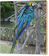 Arent I A Handsome Fellow - Blue And Gold Macaw Wood Print