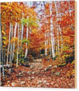 Arethusa Falls Trail Wood Print by Greg Fortier