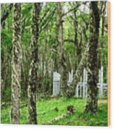 Argentina Trees Wood Print