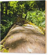 Argillite Kentucky Wood Print