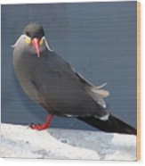 Arica Chile Sea Bird Wood Print